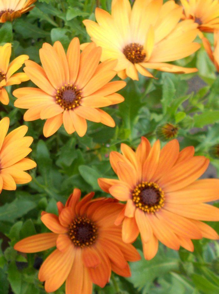 blog flower 2