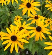 October, and autumn is in full swing. Still flowers in the garden. Such a joy as the days become shorter.