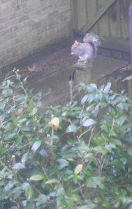squirrel at Woodlands