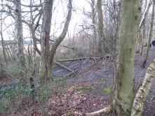 The lower path - muddy and blocked by fallen trees