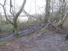A better view of some of the trees blocking the lower path